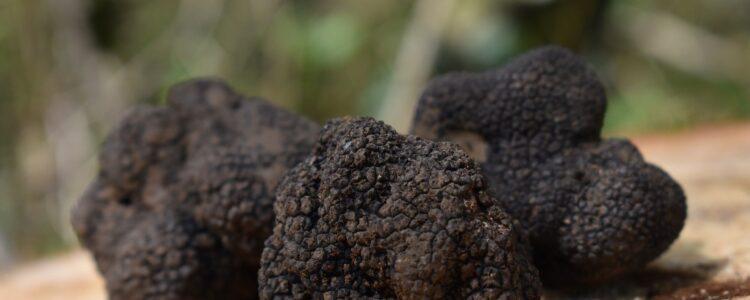 La trufa negra